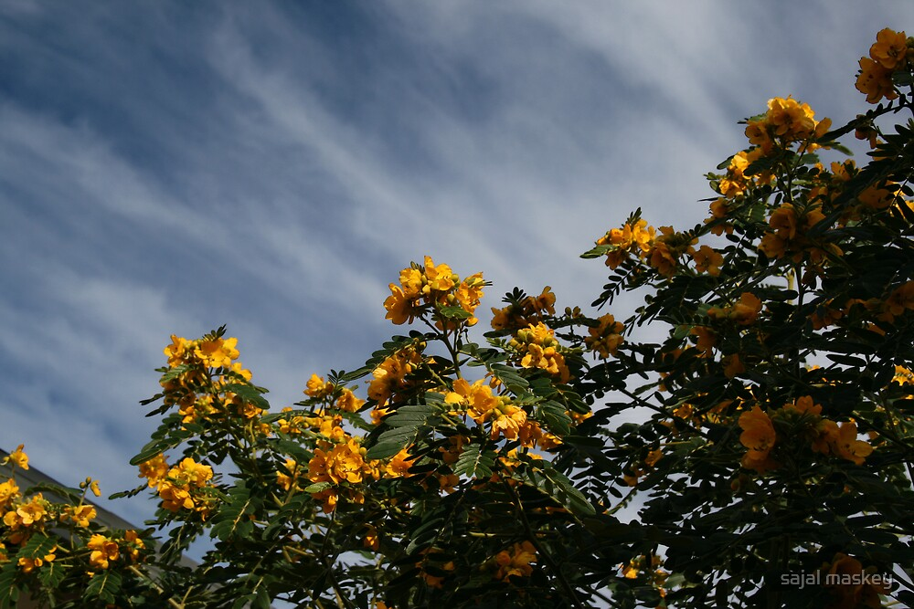 Flower and sky by sajal maskey