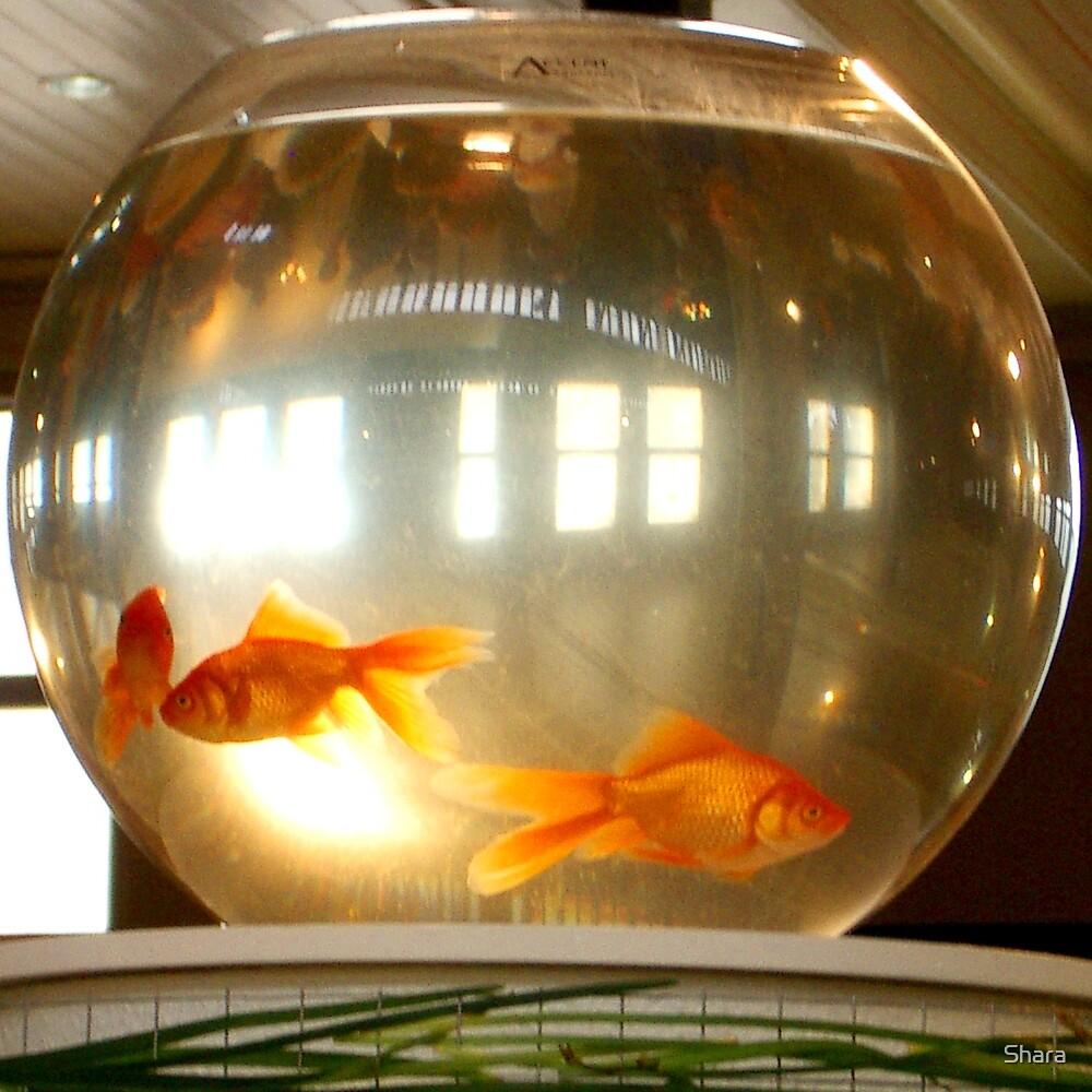 Goldfish by Shara