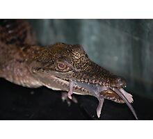 fresh water croc Photographic Print