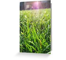 Macro blades of grass Greeting Card