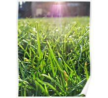 Macro blades of grass Poster