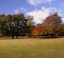Autumn Colours by Steve plowman