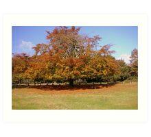 Autumn Colours 2 Art Print