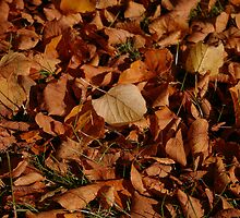 Autumn Carpet by Steve plowman