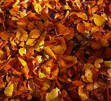 Autumn Carpet 3 by Steve plowman