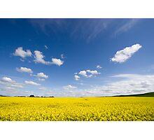Canola / Rape Seed Field Photographic Print