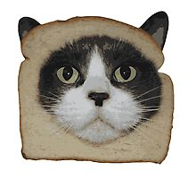 Breaded Inbread Cat Breading Photographic Print