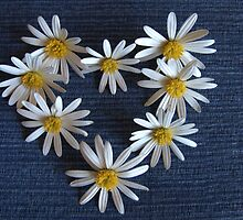 Denim and Daisies - Heart by Martie Venter