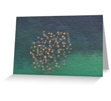 Cownosed Rays Greeting Card