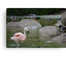 Flamingo, Duck & Co. Canvas Print