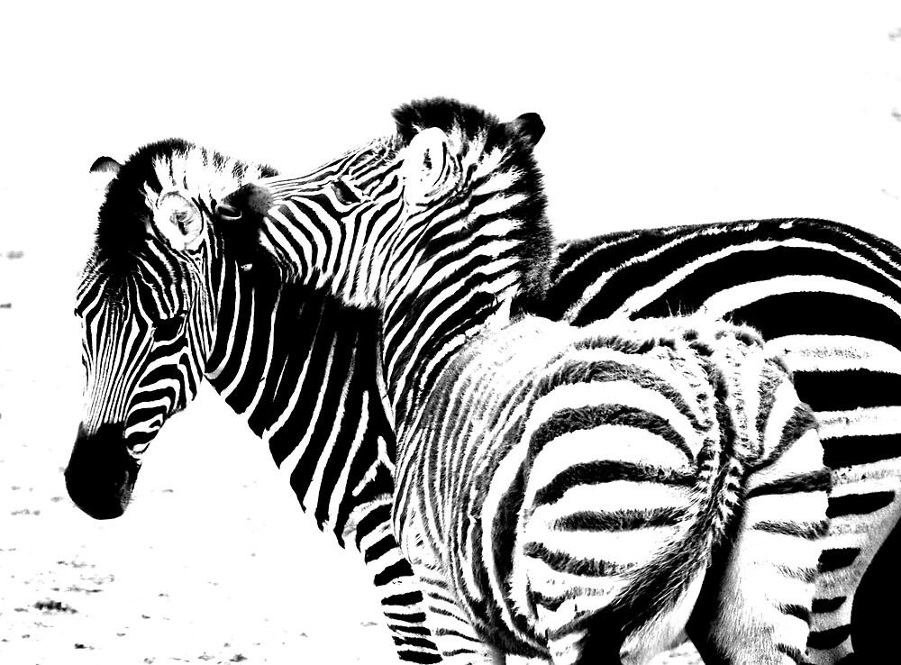 Zebra Love by Princessbren2006