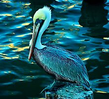 Majestic pelican  by Robert Brown