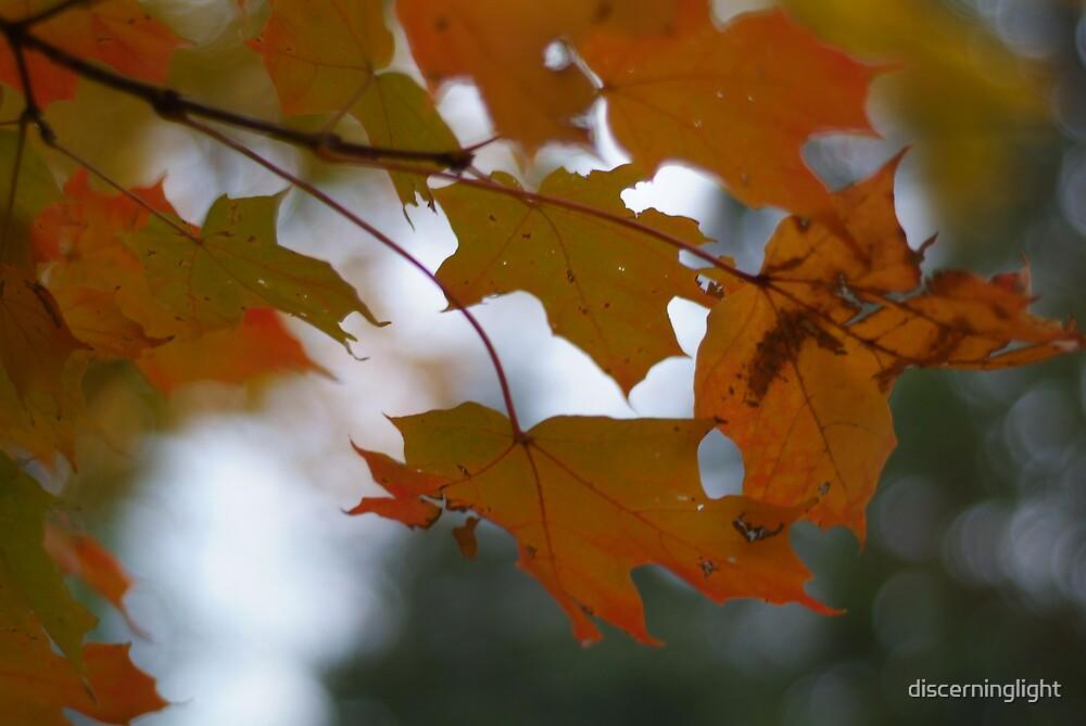 Orange Glory by discerninglight