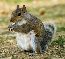 Nutty Squirrel by Thornley