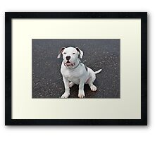 Puppy Sqaut Framed Print