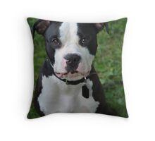 Black & White Pitbull Throw Pillow