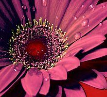 Ruby Flower by riverart