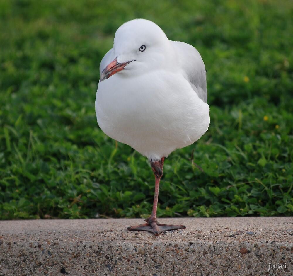 Life as a Gull has its risks by junjari