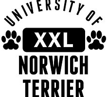 University Of Norwich Terrier by kwg2200