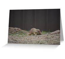 Prairie Dog Scramble Greeting Card