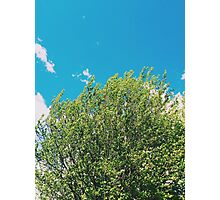 The Treetops and Bright Blue Sky Photographic Print
