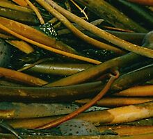 Kelp Pile (detail) by Edward A. Lentz
