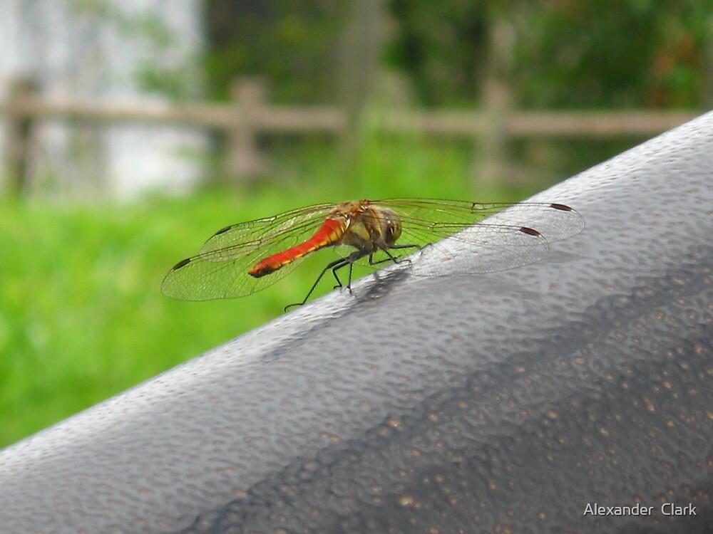 Dragonfly by Alexander  Clark