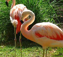 Flamingo by Alexander  Clark