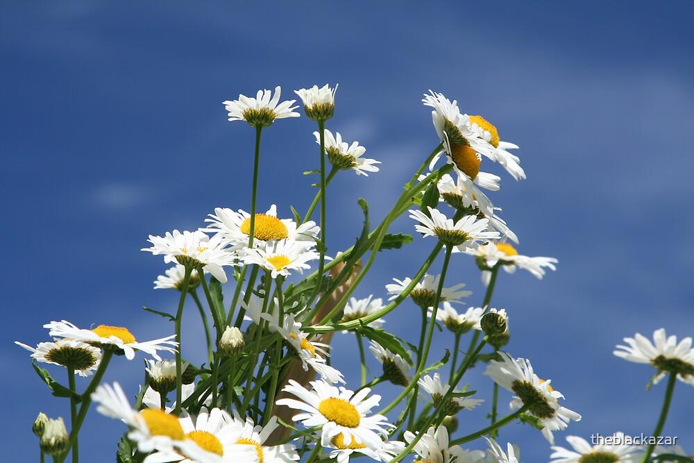 daisy, daisy by theblackazar