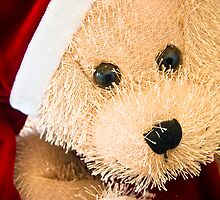 Have yourself a beary little Christmas. by rxaphotography