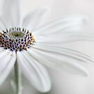 Summer white by Mandy Disher