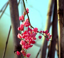 Dangle by Trish Mistric