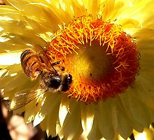 Bee at work by Tom Newman