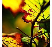 Autumn dawns Photographic Print