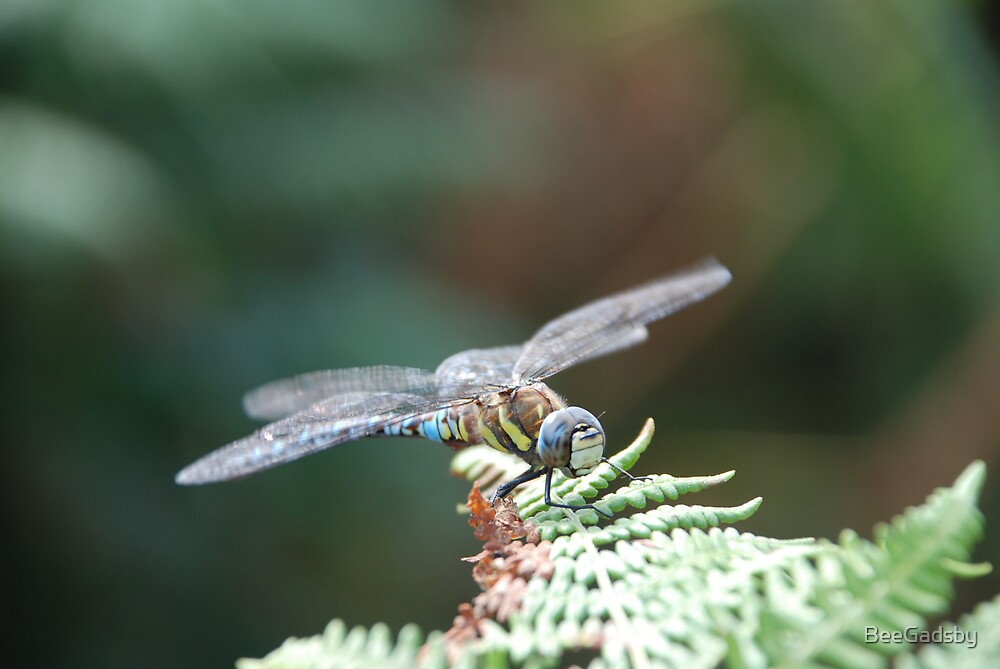 Dragon Fly by BeeGadsby