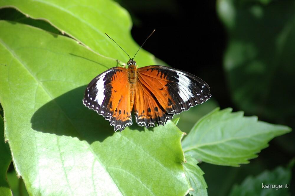 Butterfly 2 by ksnugent