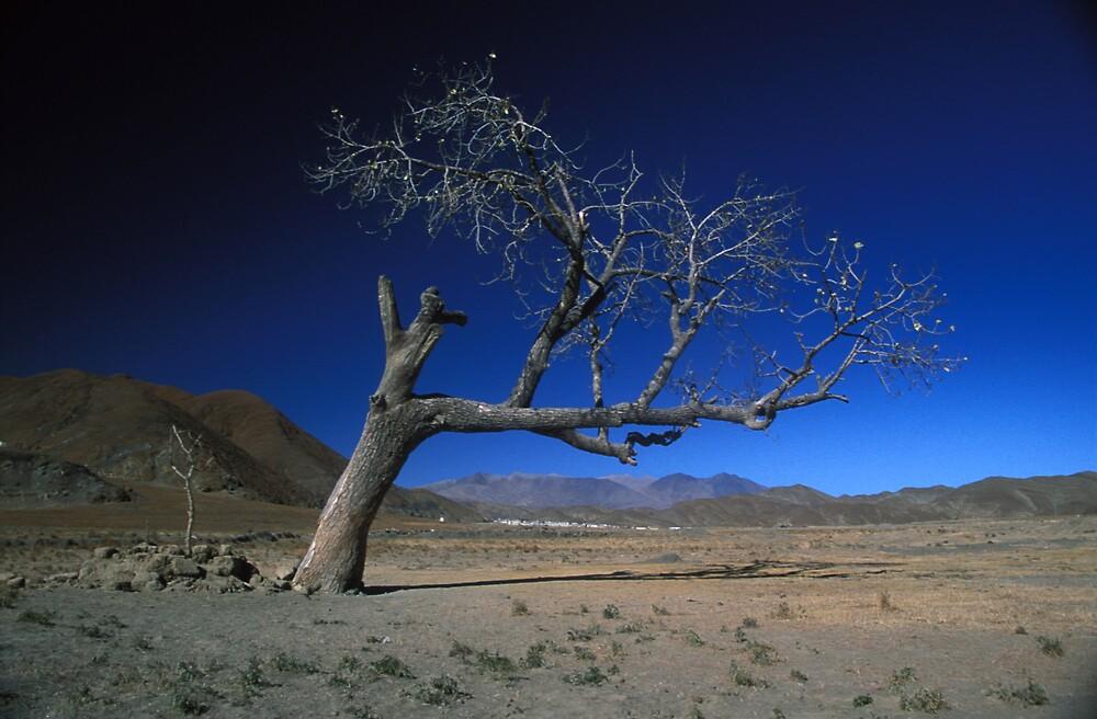 Jewel Tree by Antony Kuzmicich