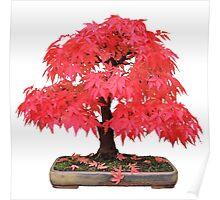 Cherry Maple Poster