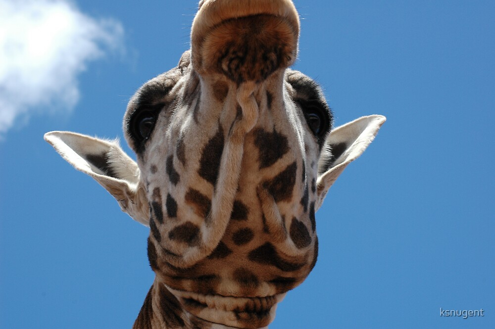 Up Close by ksnugent