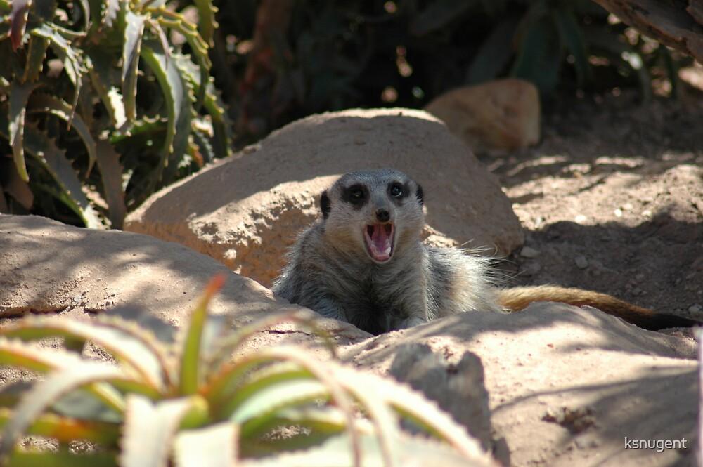 Yawn by ksnugent