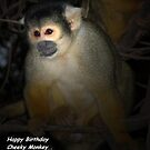 happy birthday...cheeky monkey by mickeyb
