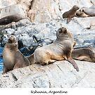 Sea lions by Jacinthe Brault
