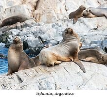 Sea lions by Jacinthe Brault