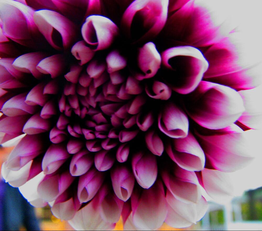 a million pink pedels by ashleymaiwoo