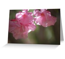 Pink Oleander Greeting Card