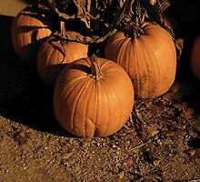 nostagic pumpkin picture by missgraice