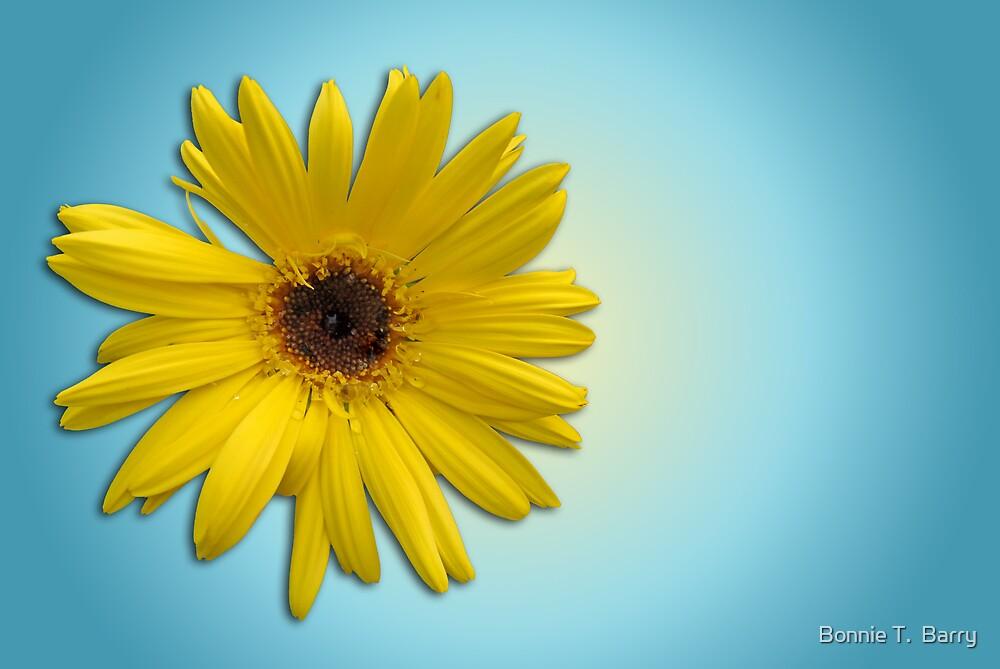 Golden Daisy on Powder Blue by Bonnie T.  Barry