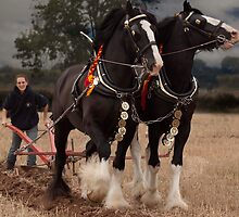 Horse ploughing  by yampy