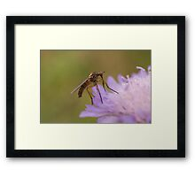 Dagger Fly Framed Print
