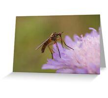 Dagger Fly Greeting Card